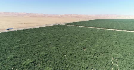 voar : Aerial shot of California vineyard and dry pasture. Green and barren landscape Stock Footage