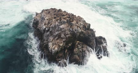 barışçı : Aerial view of ocean cliff with sea lions - waves washing up on a rock, Pacific Ocean