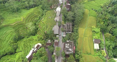 terra : Aerial view of Asian village with forest and rice terrace  Tegalalang, Ubud, Bali