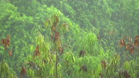 monção : Tropical heavy rain in the rainforest