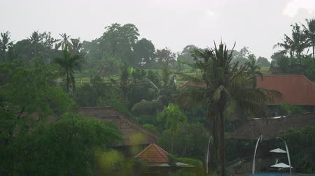 monção : Tropical heavy rain in an Asian village, Bali Vídeos
