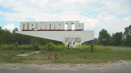 ruins : Pripyat city sign with a fox. Chernobyl nuclear disaster, catastrophe - Juni 2017: 30km Chernobyl, exclusion zone