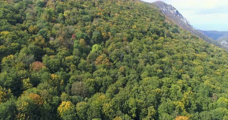 Трансильвания : Flight over of dense forest. Aerial view of beautiful green forest, Transylvania