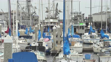 sierpien : Lot of boats in port of Monterey Bay. Crowded port scene - August 2017: Monterey, California, US Wideo