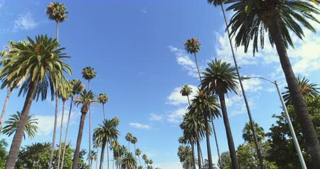 follow shot : Point of view shot of Beverly Hills, Los Angeles. Driving under palm trees Stock Footage