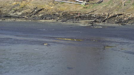 los angeles skyline : La Brea Tar Pits bubbling. Oil spill lake, Los Angeles.