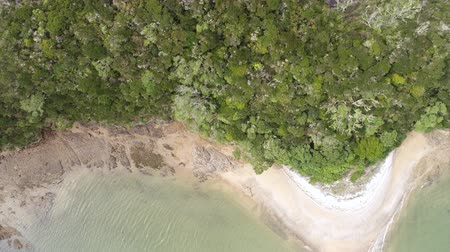 arborizado : Aerial of rainforest, small woody island - New Zealand, Bay of Island