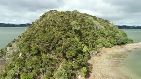 arborizado : Flight over of rainforest, small woody island - New Zealand, Bay of Island Vídeos