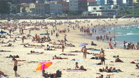 erizos : Vista de la playa tropical concurrida - marzo de 2017: playa de Bondi, Sydney, Australia Archivo de Video