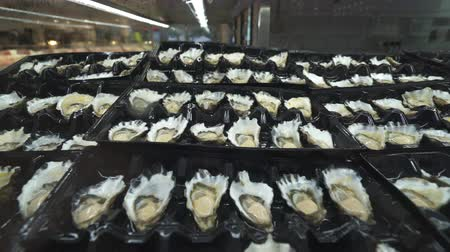 oysters : Dozen oysters on a plastic tray - Sydney fish market