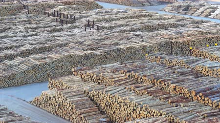 tartak : Aerial of big pile of log. Big pile of wood - March 2017: New Zealand Wideo