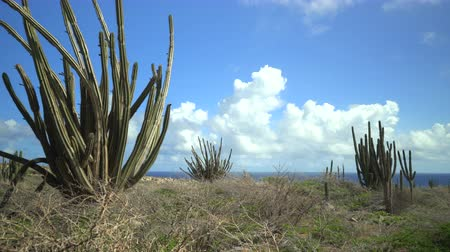 еж : Barren desert landscape with cactus and Ocean - Aruba