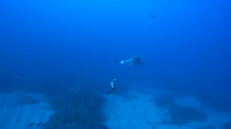 deep eyes : Giant manta ray with a scuba diver - Socorro, San Benedict island