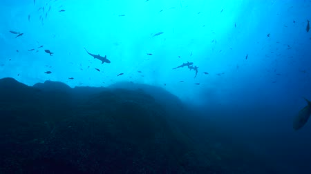 еж : Shark and scuba diver silhouette at sun - view from the deep