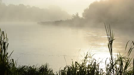 enevoado : morning sunrise reflection in misty fog rise from flowing river water.