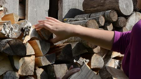 lenha : Woman hand pick up collect dry chopped firewood for burn fuel.