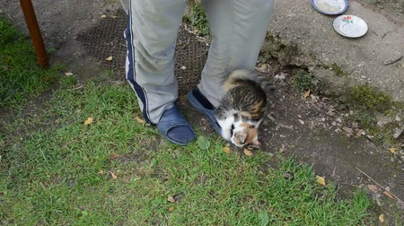 гей : young playful kitten play with man pants.
