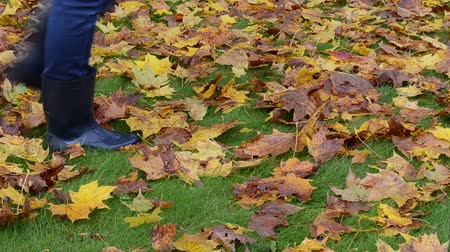 bota : Woman in rubber boots walk on meadow lawn grass cover with autumn colorful maple leaves.