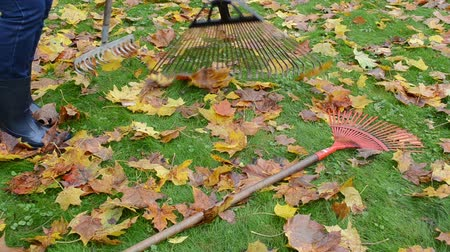 rekreace : Worker woman pick three leaf rake tools lie on meadow grass covered with colorful autumn leaves.