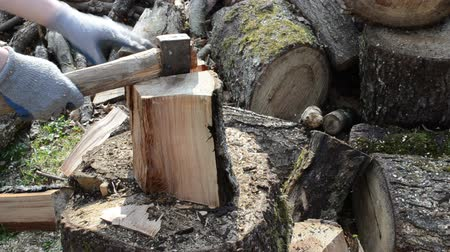 lenha : man chop wood with axe. closeup of wood chopping. firewood prepare for winter.  Vídeos