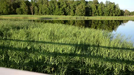 outside view : beautiful evening lake with green flora panoramic view shot from wooden bridge. Stock Footage