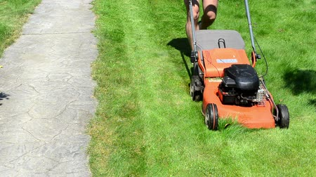 ferimento : gardener male man in shorts and flip-flop shoes push mower cut lawn grass near stone path.