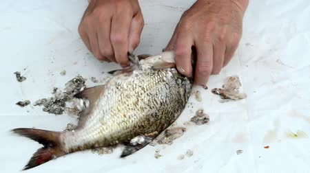 carne : speed up fast view of fisherman hand with knife clean bream fish scales and guts on white background.