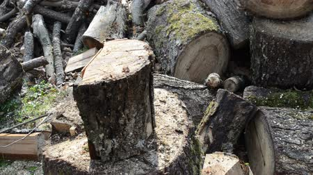 palivové dříví : closeup of wood chopping. firewood prepare for winter. man chop wood with axe.