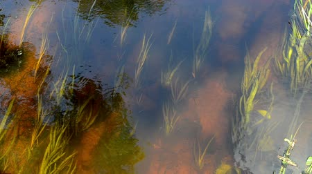 podwodny swiat : closeup of summer river stream water flow reflections underwater flora and fishes Wideo