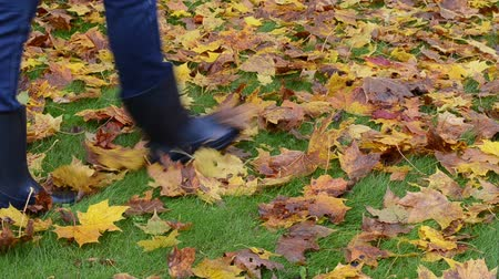 отдыха : woman in rubber boots walk on meadow lawn grass covered with autumn colorful maple leaves. Стоковые видеозаписи