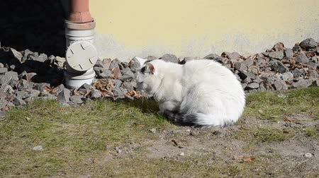 wallow : white lazy cat take the sun Stock Footage