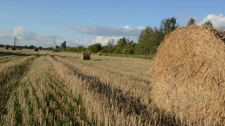 hay pile : panorama view straw bales after agricultural field harvest in autumn. Stock Footage