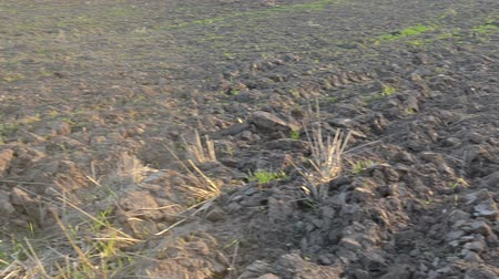 dirt : closeup turn view of agricultural plowed field ground soil in evening. Stock Footage