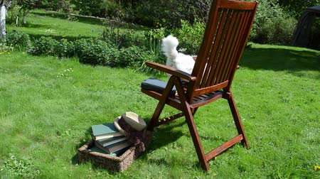 philosopher : Cat philosopher on wooden chair near books walk away on garden lawn.