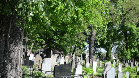 temető : Old birch trees grow in rural graveyard cemetery and lot of monuments grave tomb stones between them. Death smell. Stock mozgókép