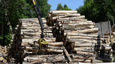 лесоматериалы : Stack of dry felled tree logs and crane claw grab and lift firewood to trailer.
