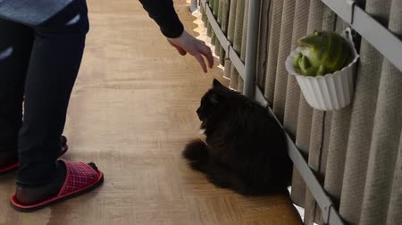 pawed mammal : wince black cat in balcony and woman with red slippers have carried him away Stock Footage