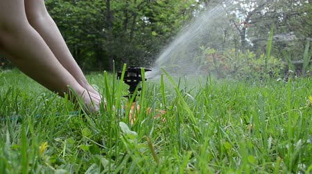 zástrčka : Gardener woman hands plug water hose to special watering equipment sprinkler tool and water starts to spray on flowers in garden.
