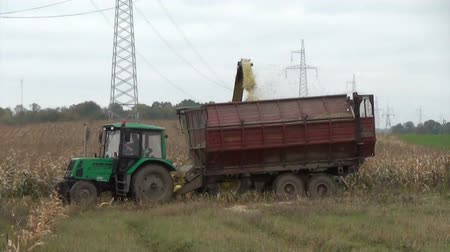 kulaklar : Seasonal farm work maize field. Harvester ride close to the tractor and pour grain into the trailer