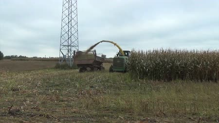 tractor trailer : seasonal agricultural corn field harvesting with heavy industrial machine
