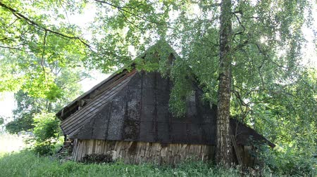 kulübe : old ramshackle country house covered with tall grass between the tall birch trees