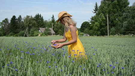 herbalist : Pretty farm girl gather pick cornflower bluet herb blooms to wicker dish in agriculture field near rural house.
