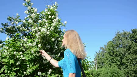 tenderness : woman in blue sweater pick jasmin syringa bush white blooms on background of blue sky in summer. Stock Footage