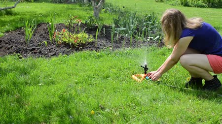 unplug : Gardener woman unplug water hose to special watering equipment  sprinkler tool and water starts to spray on flowers in garden. Stock Footage