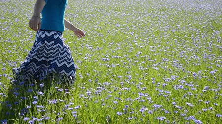браслет : Closeup of woman girl in skirt walking in blue blossom bloom cornflower flowers agriculture field.