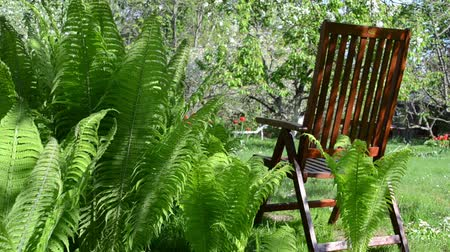 quintal : Empty wooden chair near fern plant leaves and blooming fruit trees in spring garden. Vídeos