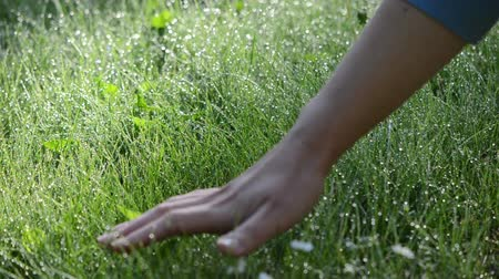 érintés : hand touch green wet grass covered with big dense dew water drops in early morning. Stock mozgókép