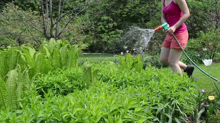 etkinlik : young woman girl in sexy shorts watering fern plants with hand hose sprayer sprinkler tool. Stok Video