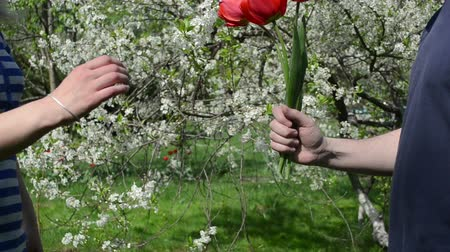 dát : Man boyfriend husband give red tulip flowers to woman girlfriend wife in spring garden.