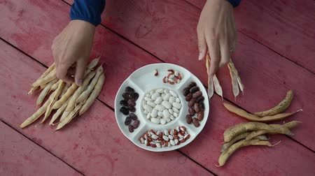 шелуха : closeup of farmer hands shell husk decorative colorful bean pods to white dish.